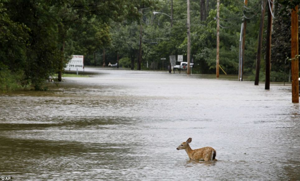 The Effects a Hurricane has on Local Deer Population | Bow Hunting ...
