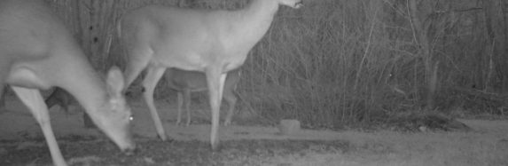 Trail Cam update 1/23/2013