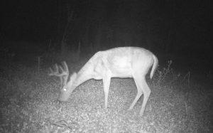 Trail Cam Update 9/15/2014