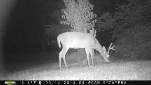 Trail Cam Update 9/28/2014