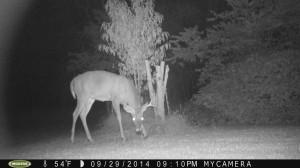Trail Cam Update 10-14-2014