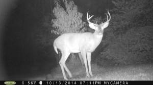 Trail Cam Photo Update 11/18/2014