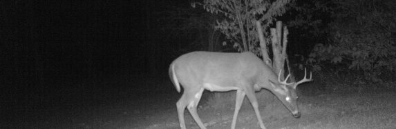 Trail Cam Update 11 – 3 -2015