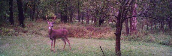Trail Cam Update (Finally) 10-10-2016
