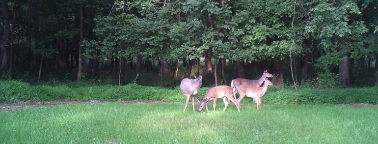 Trail Cam Photo Update 8-29-2017