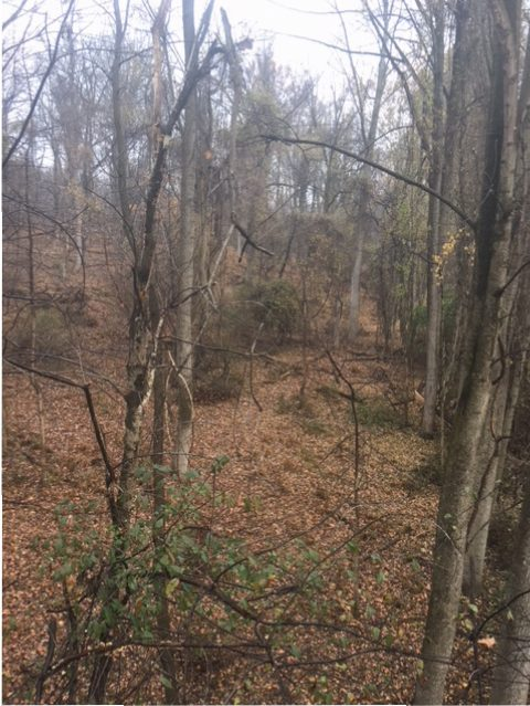 Bow Hunting Loch Raven During Rut 11/9 – 11/13/2017