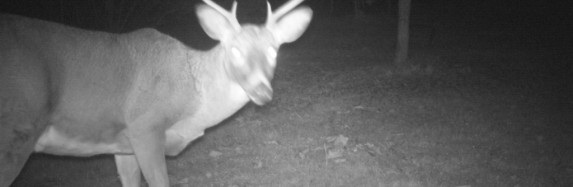 Trail-Cam Pictures 11/26/2013